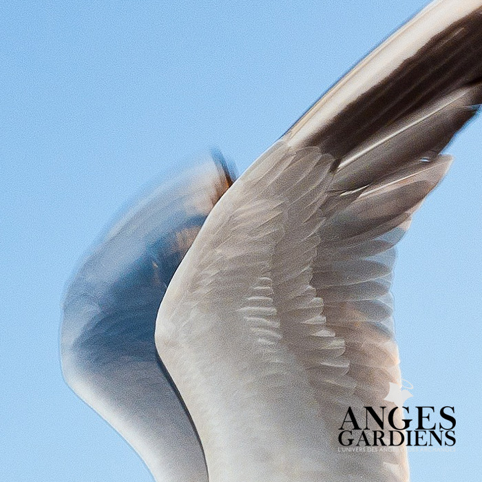 ailes-d-ange