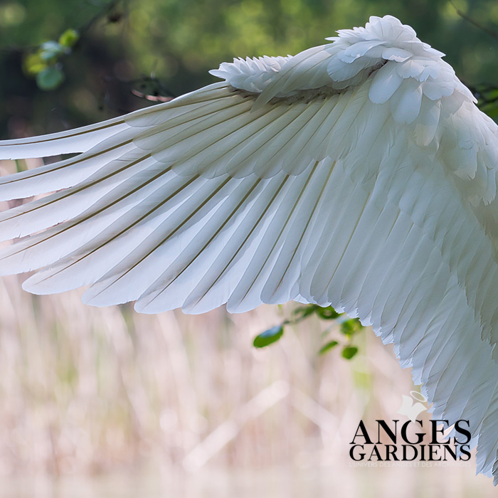 ailes-d-anges