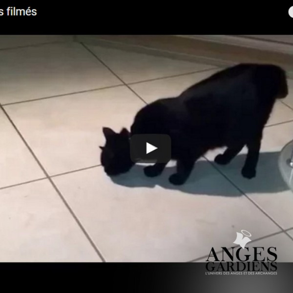 orbes flmees sur video